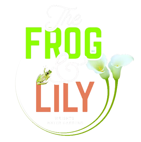 Frog & Lily Cafe